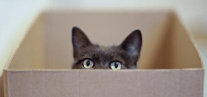 Pisica la cutie